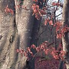 Beech Detail by ShinyPhoto
