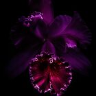Purple Orchid by alan shapiro