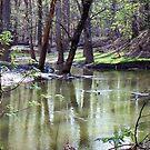 Ottawa River 2 by Vicki James