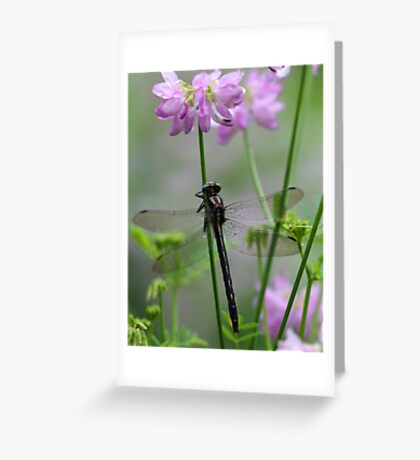 Black Dragonfly and Crown Vetch Greeting Card