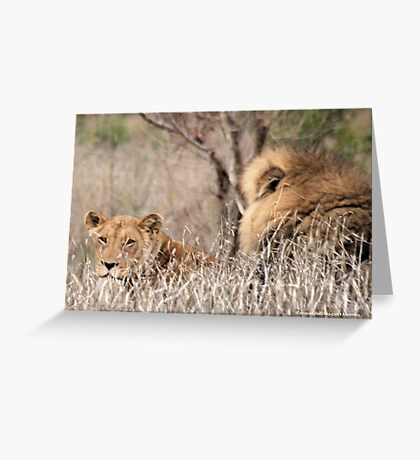 IN A DISTANCE, WELL CAMOUGFLAGED, THE LION AND LIONESS.. Greeting Card