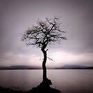 Loch Lomond Sentinel by David Mould