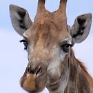 IN PORTRAIT - The Giraffe - giraffa camelopardis by Magriet Meintjes
