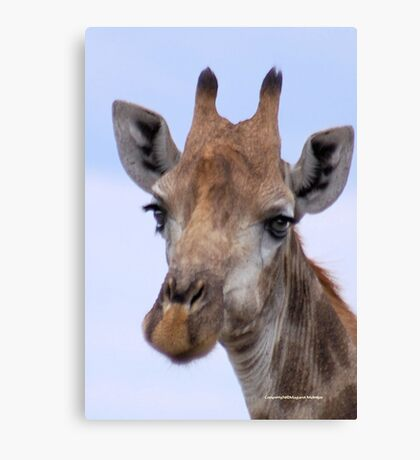 IN PORTRAIT - The Giraffe - giraffa camelopardis Canvas Print