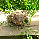 A Relaxed Toad  by RollZLX