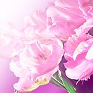 pink tulips by aquaarte