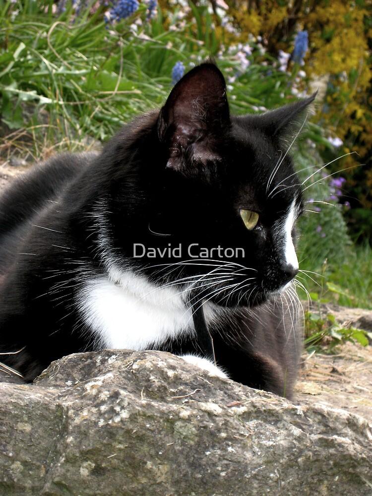 Duffy Looking Pensive by David Carton