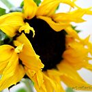Elephant-Sunflower by Ingrid Funk
