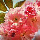 Cherry Pink by Faye White