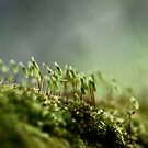 Forest by Sam Mortimer