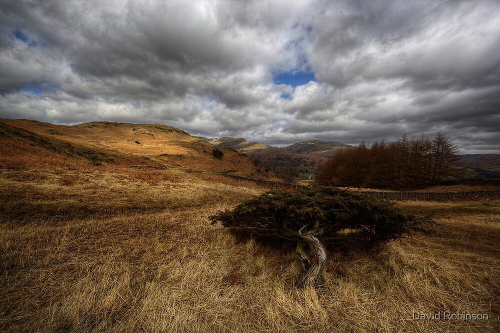 Alone by David Robinson