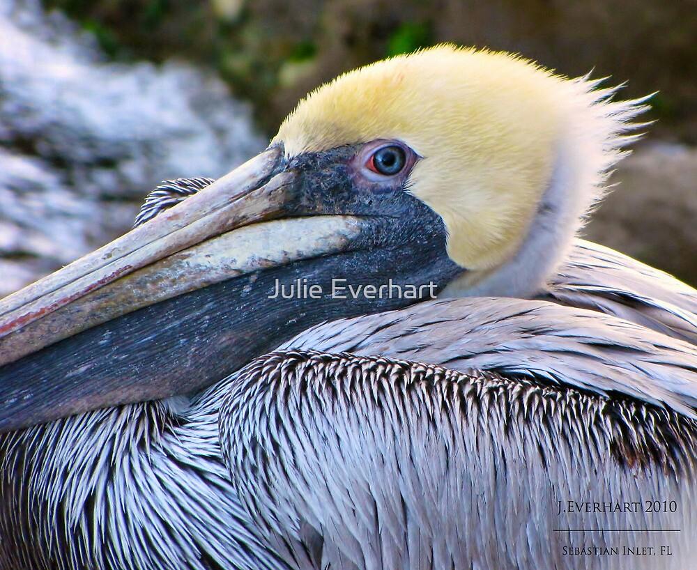 Pelicans Eye by Julie Everhart