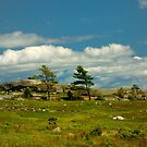 Sedgwick, Maine by fauselr