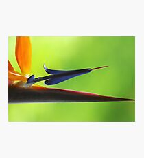 The Bird's Spear Photographic Print