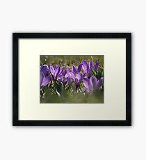 Sweet Spring Fling Framed Print
