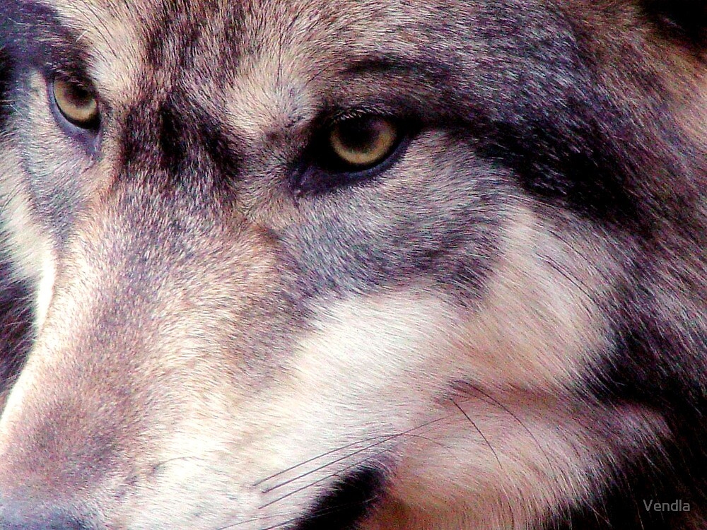 Eye of the Wild by Vendla
