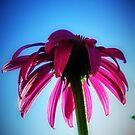 Pink Sunbrella by shutterbug2010