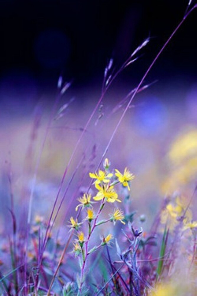 Purple Meadow by LoveMovies