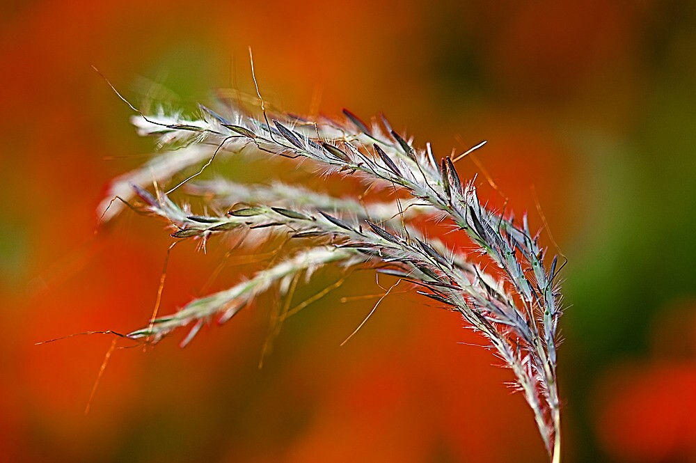 Study of Wild Grass #2 by Mukesh Srivastava