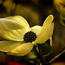 Flowering by Barbara  Brown