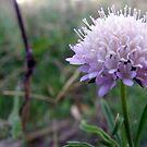 purple flower by elizabethrose05