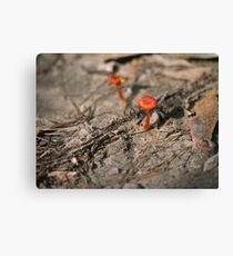 Little Red Fungi Canvas Print