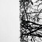 « Arboressence#9 » par Xavier Gavaud