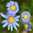 Blue & Yellow after the rain; Wat Garden, La Mirada, CA USA by leih2008