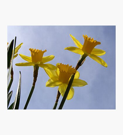 Daffodil from a bug's point of view. Photographic Print