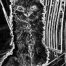 Altes Gal - Selkirk Rex von Marlene Watson