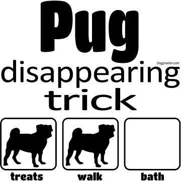 Pug disappearing trick  by doggination