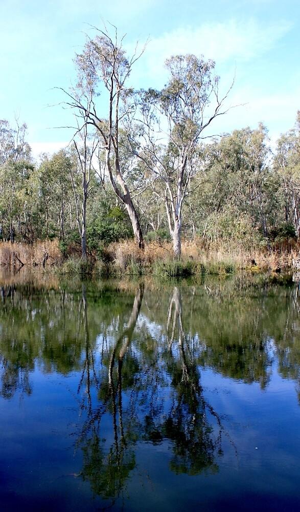 Yarra Reflection by redda