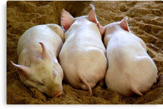 Sleeping Piglets  by doughnut