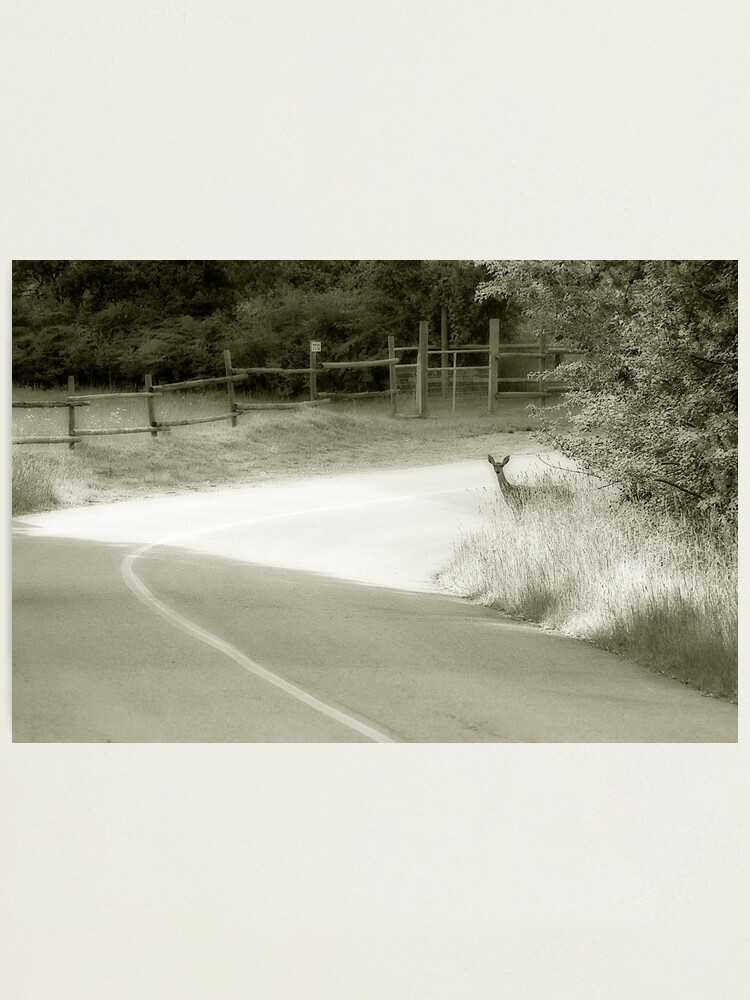 Alternate view of Deer Around The Bend Photographic Print