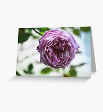 Lonely Rose Greeting Card