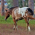 In the Pasture by Michiale