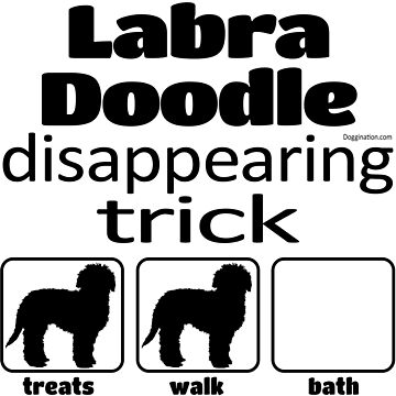 Labradoodle disappearing trick by doggination