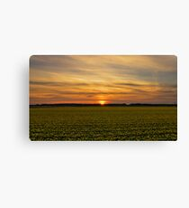Yellow & sunset. Canvas Print