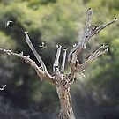 Tree of Swallows by nadine henley