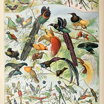 Adolphe Millot oiseaux B by wetdryvac