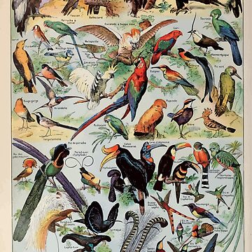 Adolphe Millot oiseaux pour tous A by wetdryvac