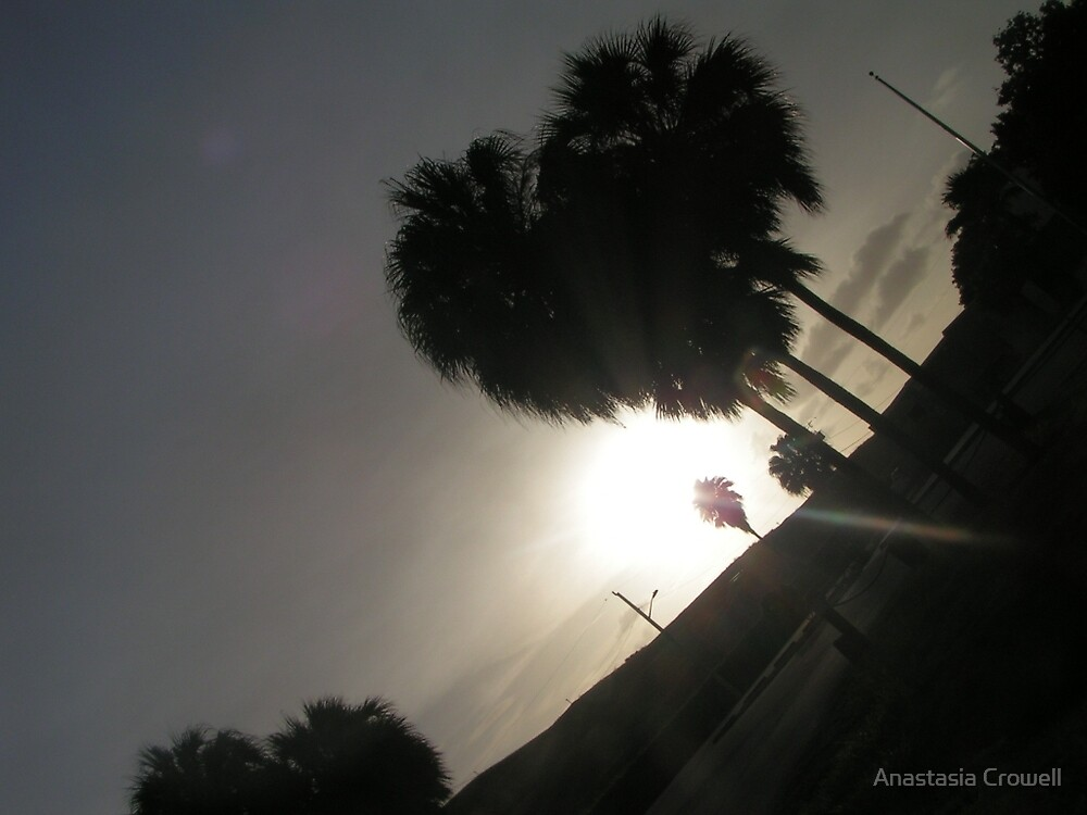 Palm in the sunset by Anastasia Crowell