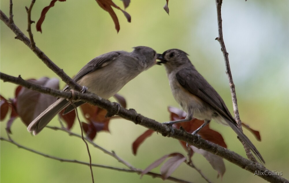 Kissy-Face Tit Mice by AlixCollins