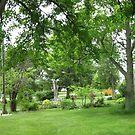My front yard by Jeannie Matthews