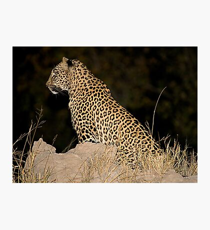 Female Leopard Photographic Print