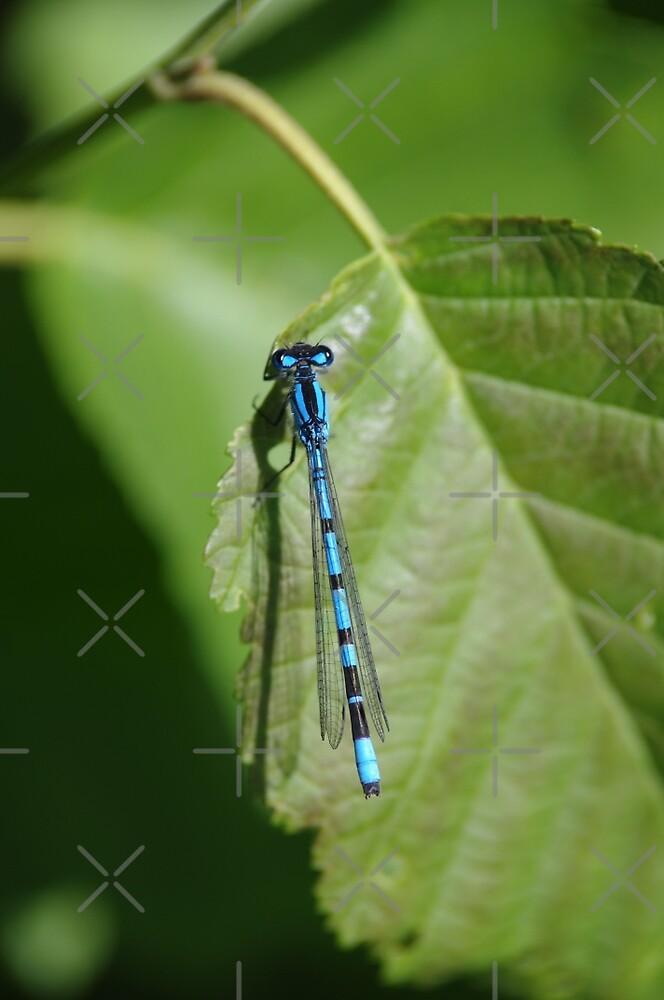 Dragonfly by Doug Cargill