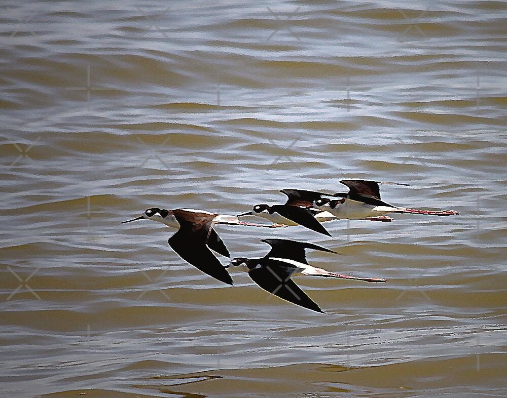 Black-Necked Stilts At Salton Sea by CarolM