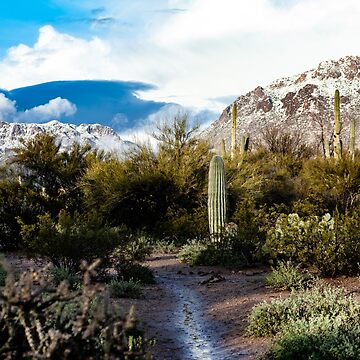 Tucson snow #2 by designfly