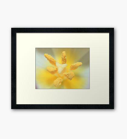 Macro Tulip Framed Print