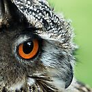 Long eared Owl - Nature and Wildlife Original photo graphic design Merchandise by VIDDAtees